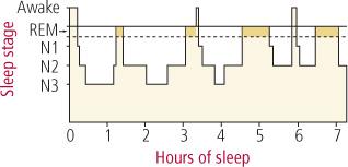 alvásmintázat